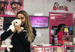 Why a Pet Grooming Franchise System Makes So Much Sense